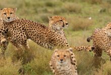 Photo of Maasai Mara Game Reserve: Affordable Safaris