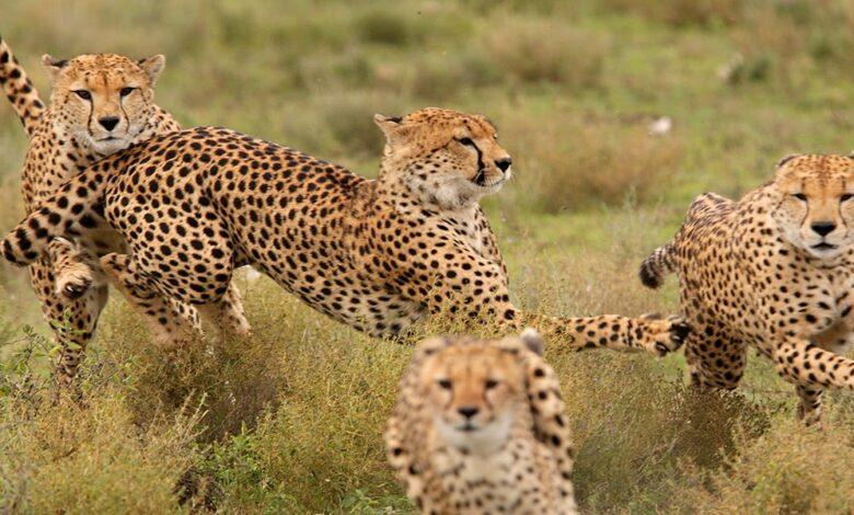 Photo of Maasai Mara Game Reserve: Affordable Safaris