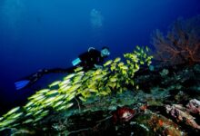 Photo of Best Guide to Diving in Raja Ampat
